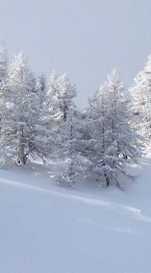 Winterlandschaft, Wald | ÖGSL – Österreichische Gesellschaft für Schnee und Lawinen
