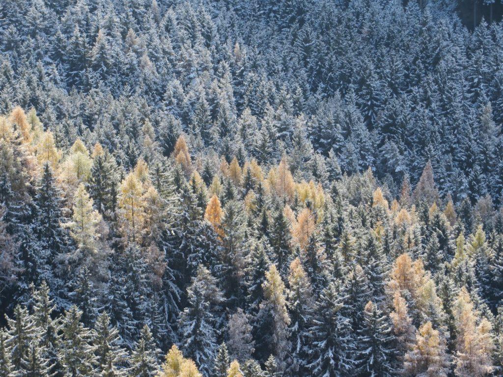 Herbst, Wald | ÖGSL – Österreichische Gesellschaft für Schnee und Lawinen